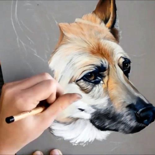 Anzeigebild Schäferhund